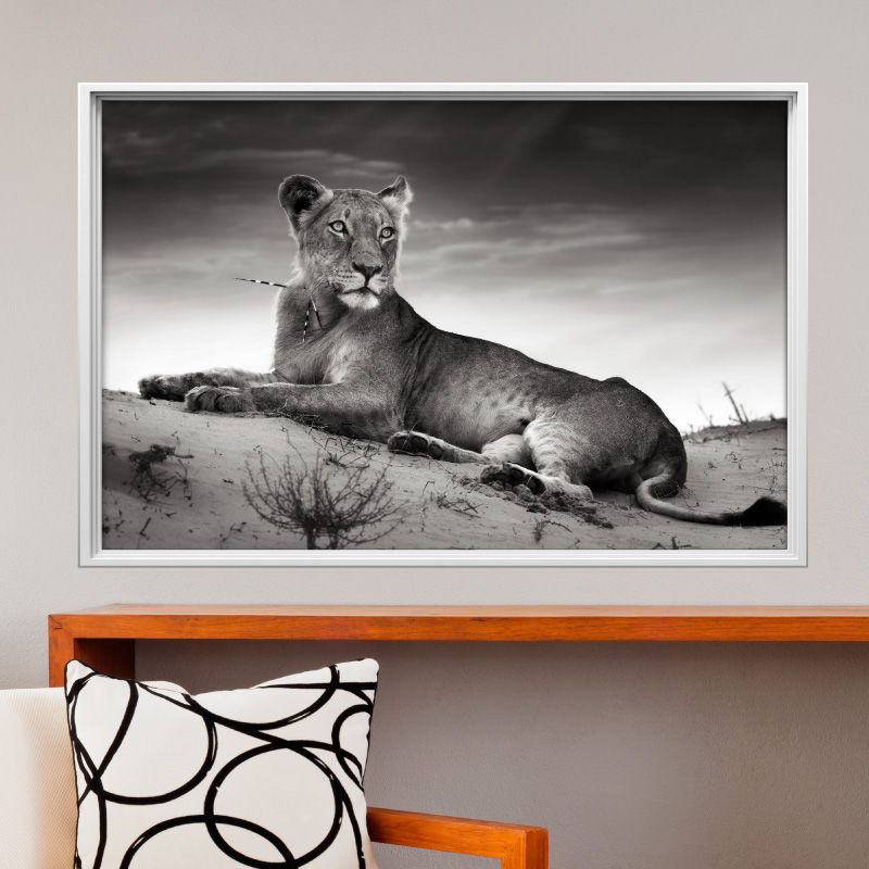 sticker cadre photo la lionne stickers animaux animaux de la jungle ambiance sticker. Black Bedroom Furniture Sets. Home Design Ideas