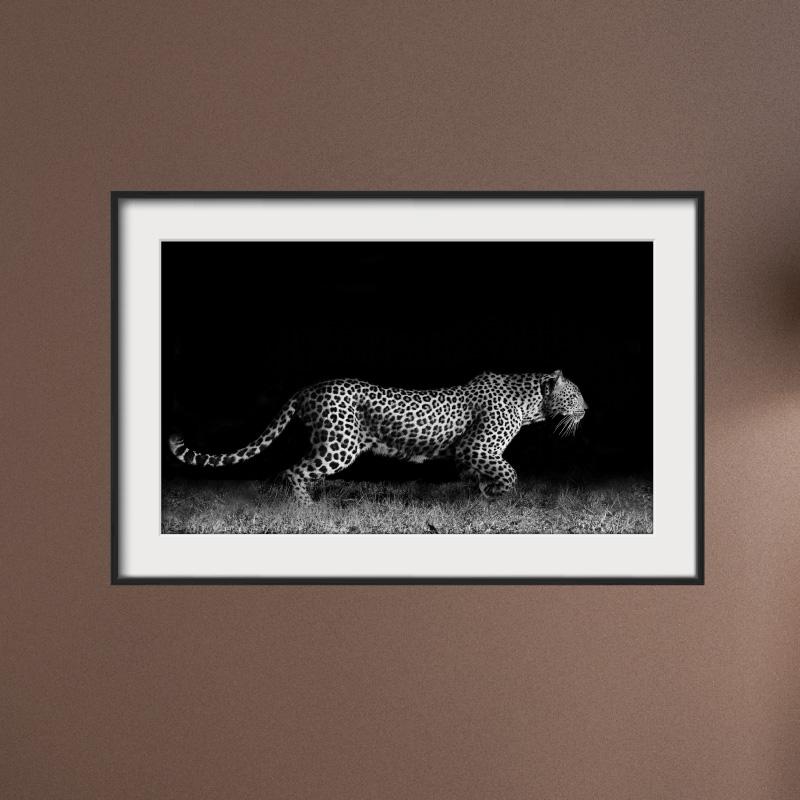 sticker cadre photo le gu pard dans la nuit stickers animaux animaux de la jungle ambiance. Black Bedroom Furniture Sets. Home Design Ideas