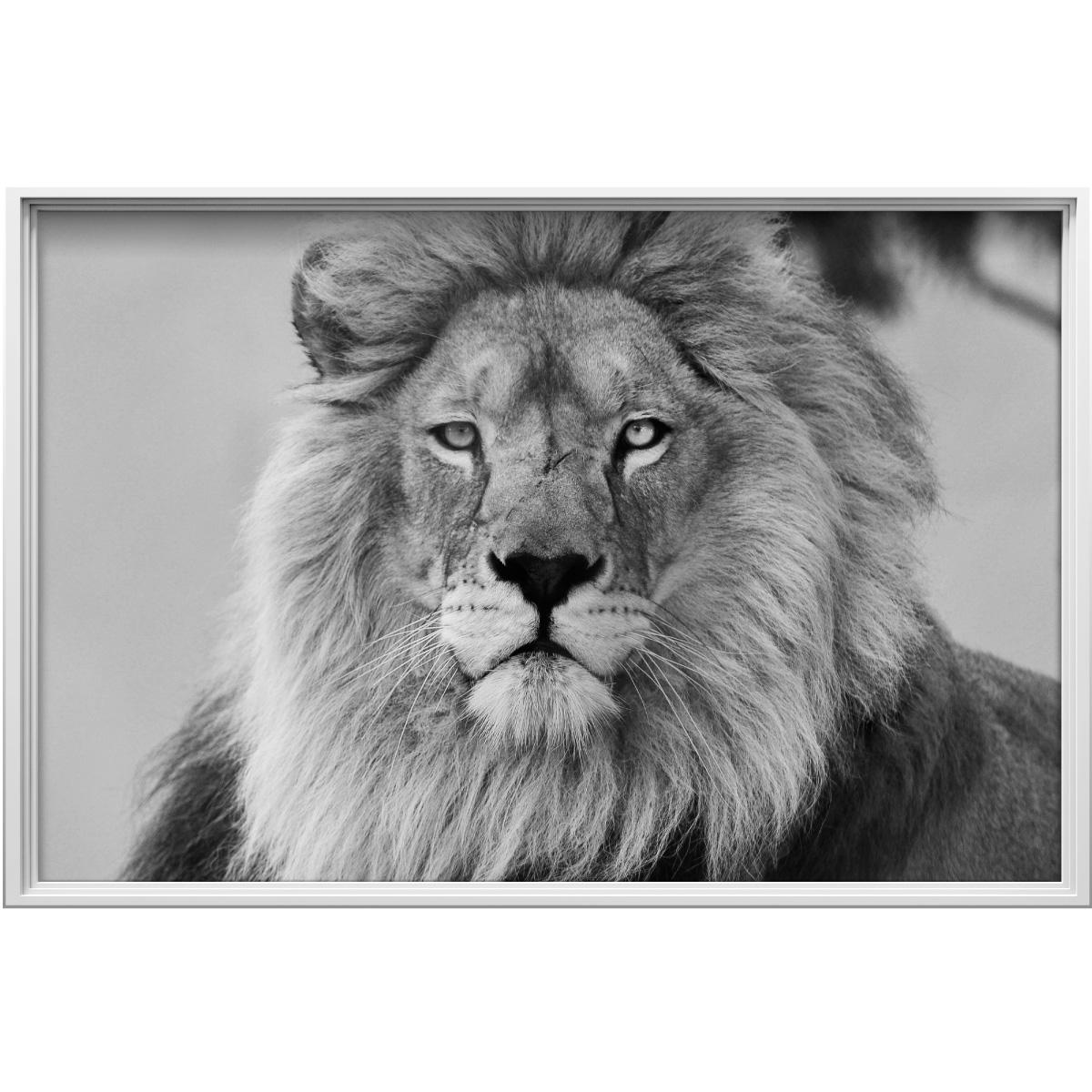 Sticker cadre photo le roi de la jungle stickers animaux animaux de la jungle ambiance sticker - Style cadre photo ambiance ...