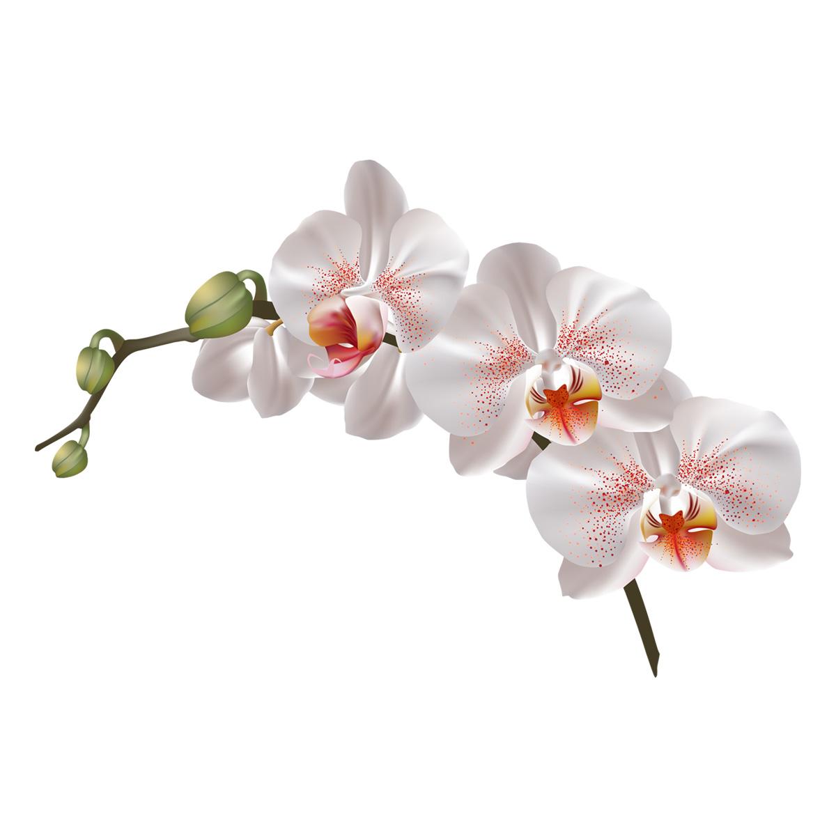 Sticker Fleur Dorchidée